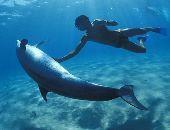 Dolphin13
